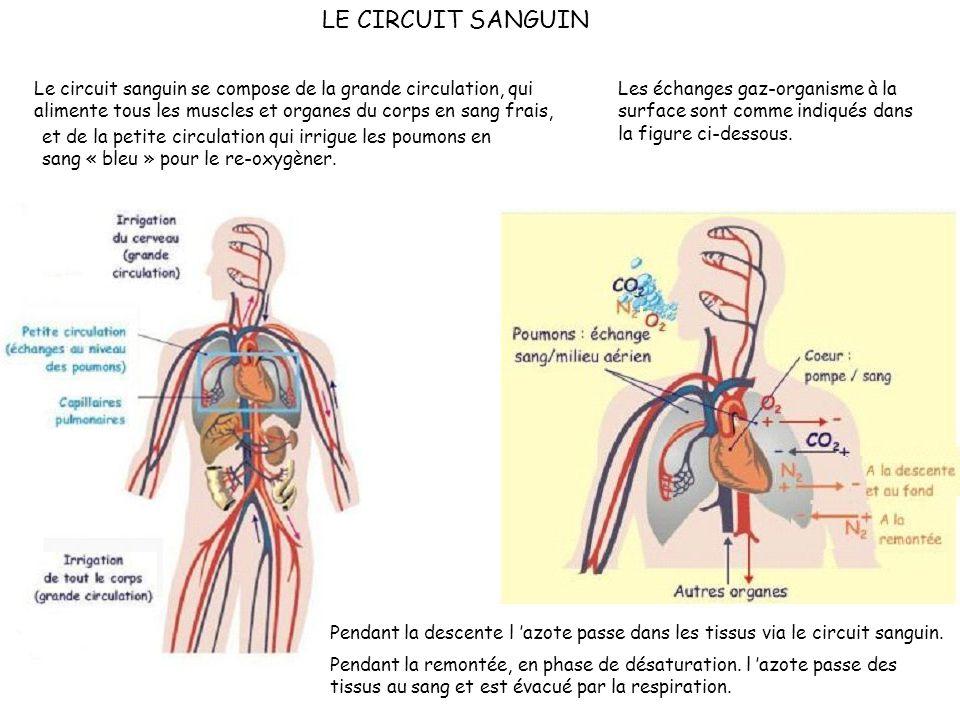 LE CIRCUIT SANGUIN Le circuit sanguin se compose de la grande circulation, qui alimente tous les muscles et organes du corps en sang frais,