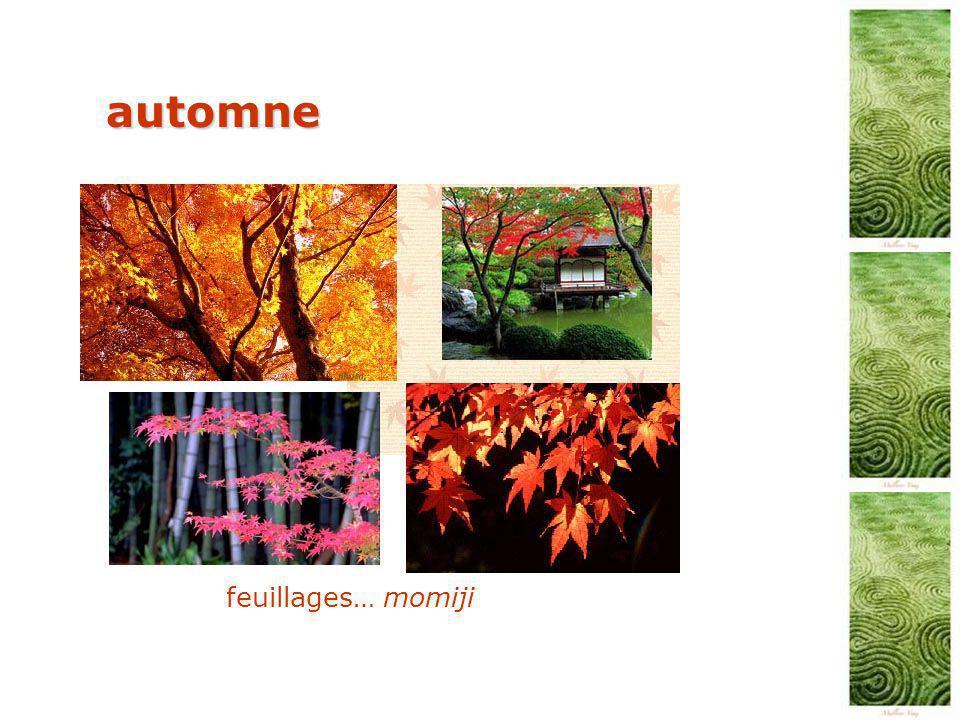automne feuillages… momiji