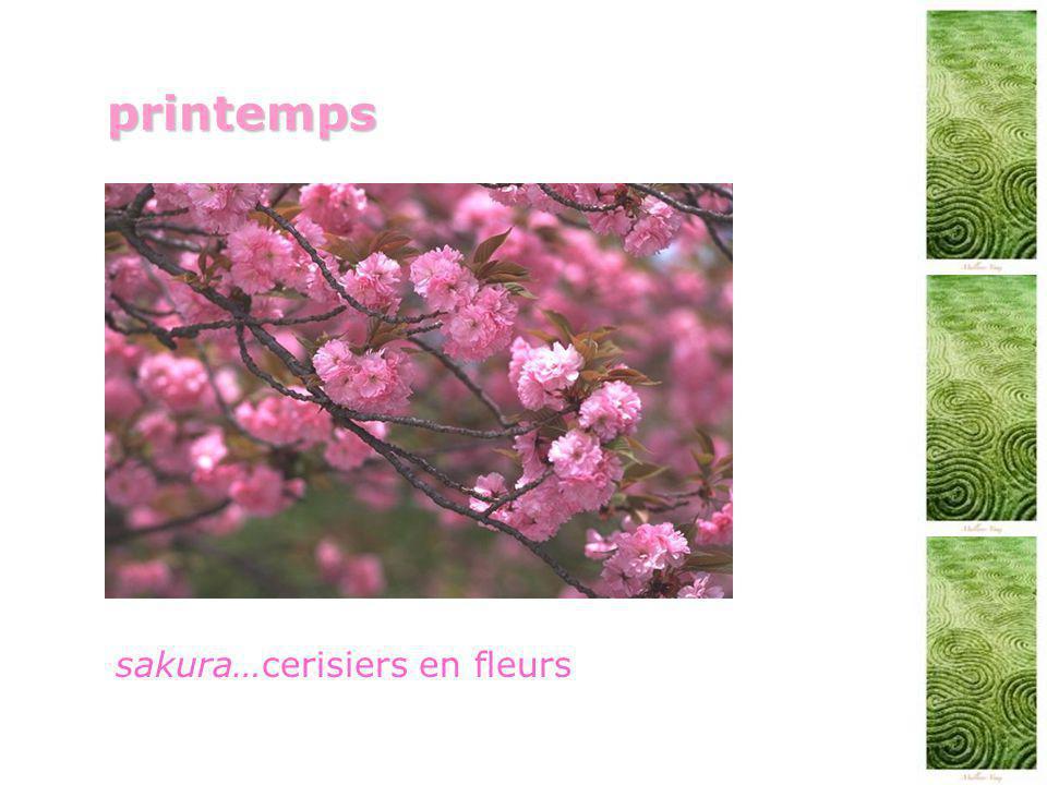 printemps sakura…cerisiers en fleurs