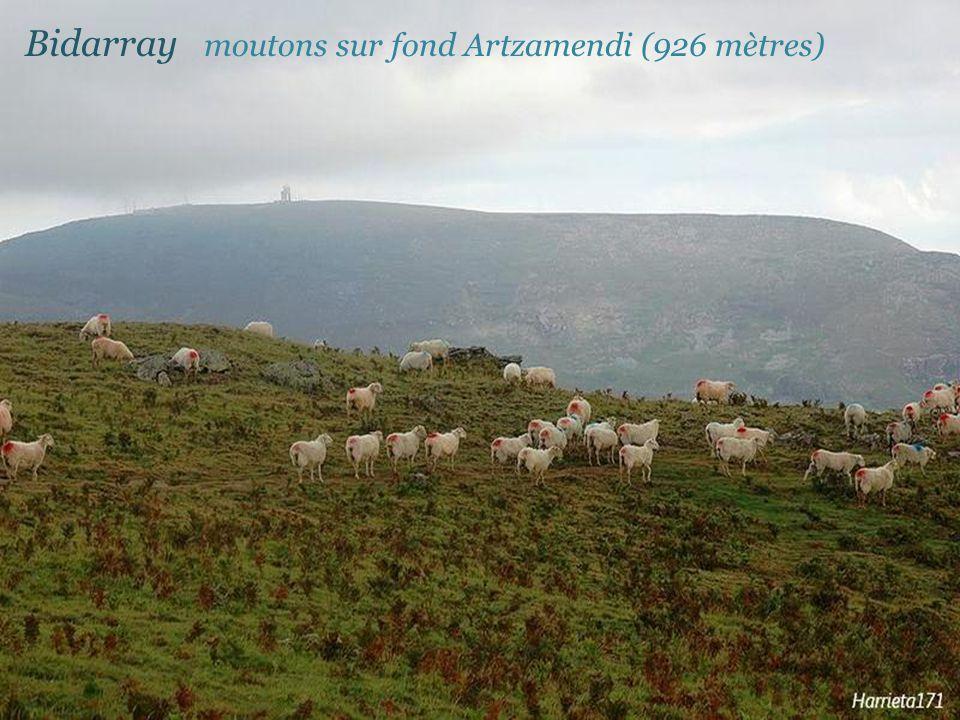 Bidarray moutons sur fond Artzamendi (926 mètres)