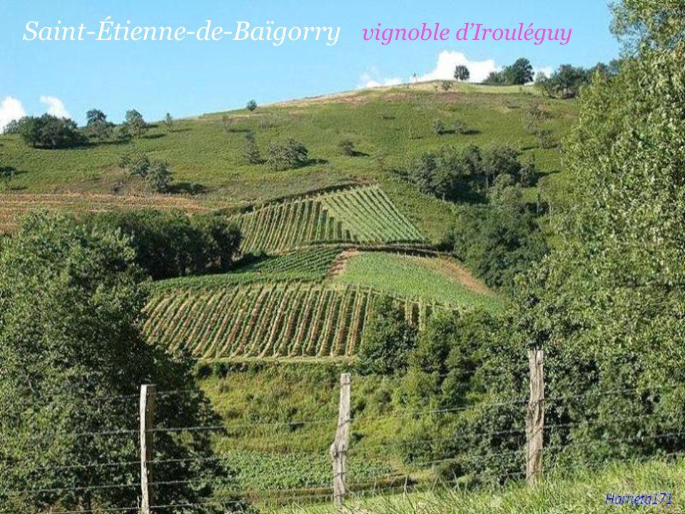 Saint-Étienne-de-Baïgorry vignoble d'Irouléguy