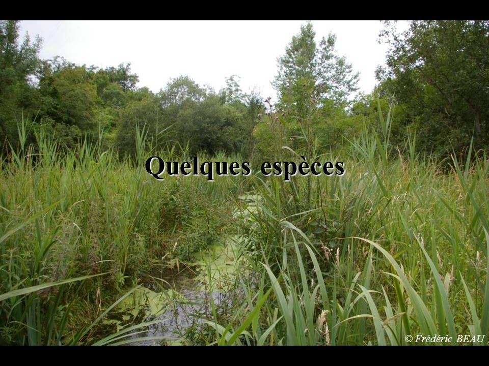 Quelques espèces © Frédéric BEAU