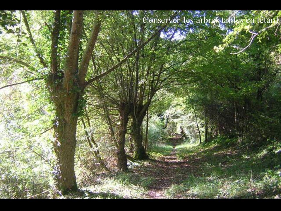 Conserver les arbres taillés en têtard
