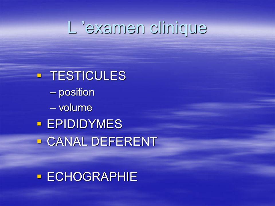 L 'examen clinique TESTICULES EPIDIDYMES CANAL DEFERENT ECHOGRAPHIE