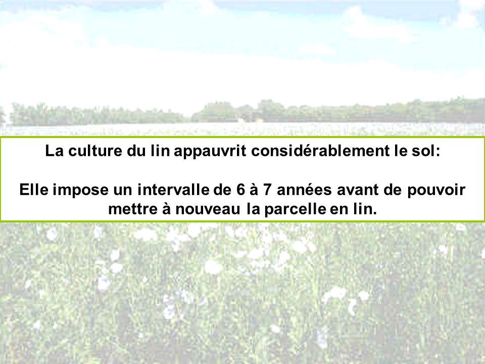 La culture du lin appauvrit considérablement le sol: