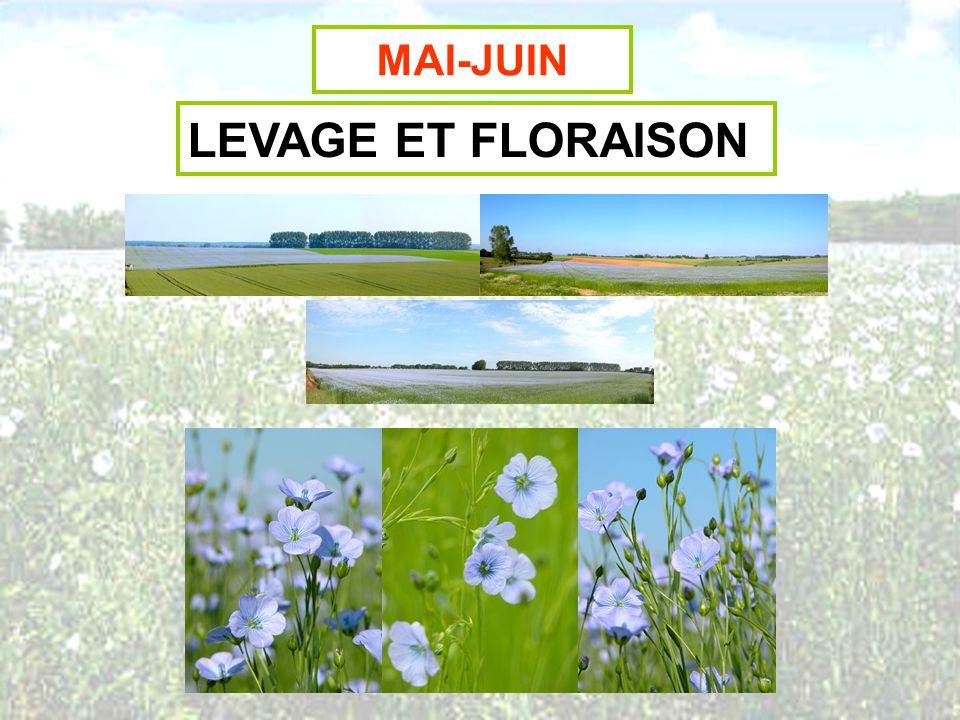 MAI-JUIN LEVAGE ET FLORAISON