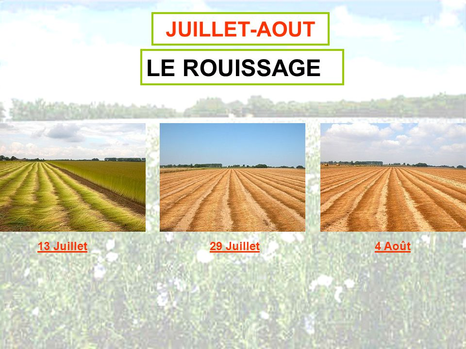 JUILLET-AOUT LE ROUISSAGE 13 Juillet 29 Juillet 4 Août