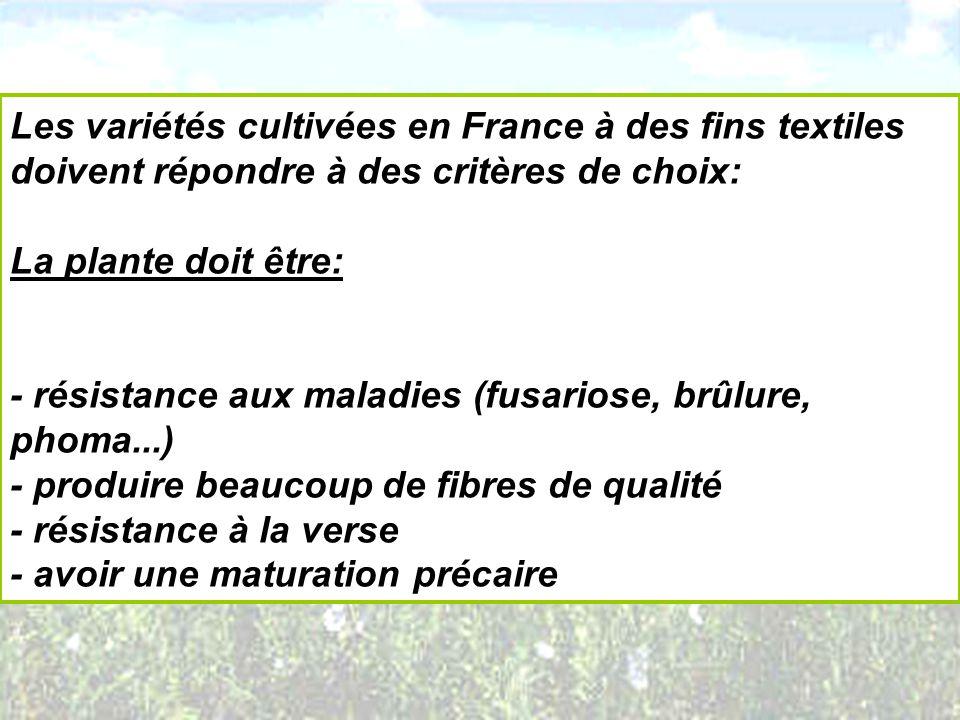 Les variétés cultivées en France à des fins textiles doivent répondre à des critères de choix: