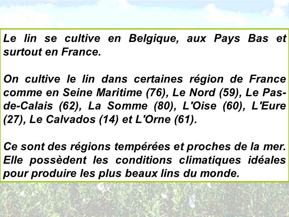 Le lin se cultive en Belgique, aux Pays Bas et surtout en France.