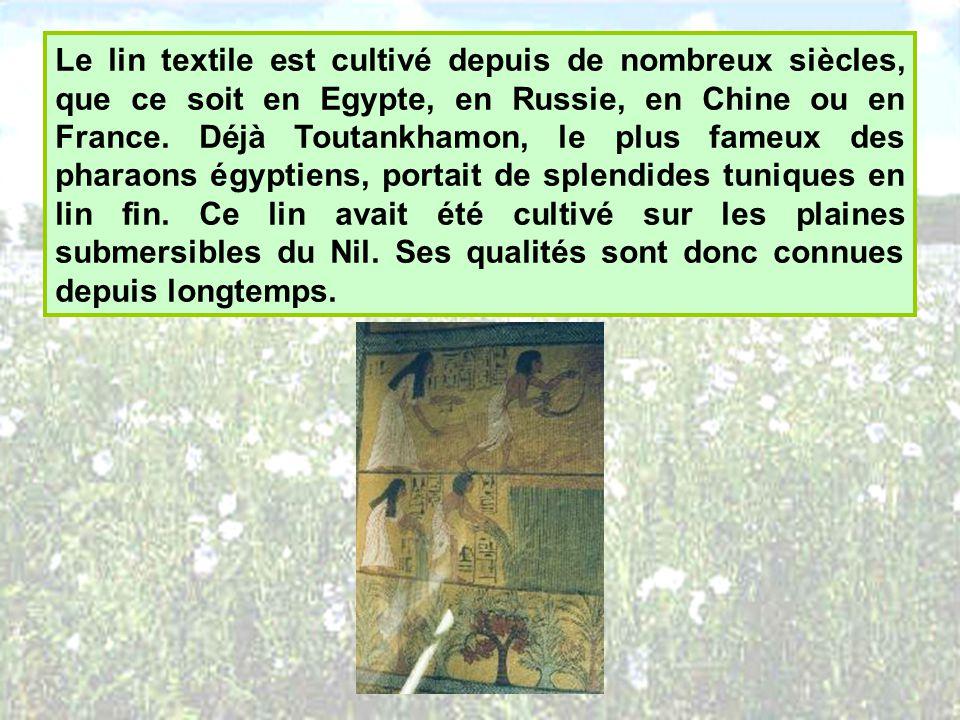 Le lin textile est cultivé depuis de nombreux siècles, que ce soit en Egypte, en Russie, en Chine ou en France.