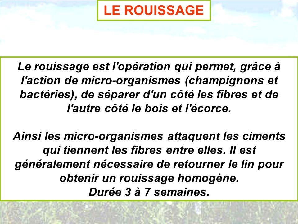 LE ROUISSAGE