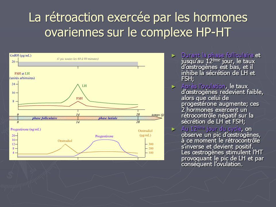 La rétroaction exercée par les hormones ovariennes sur le complexe HP-HT