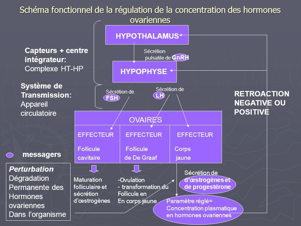 Schéma fonctionnel de la régulation de la concentration des hormones ovariennes
