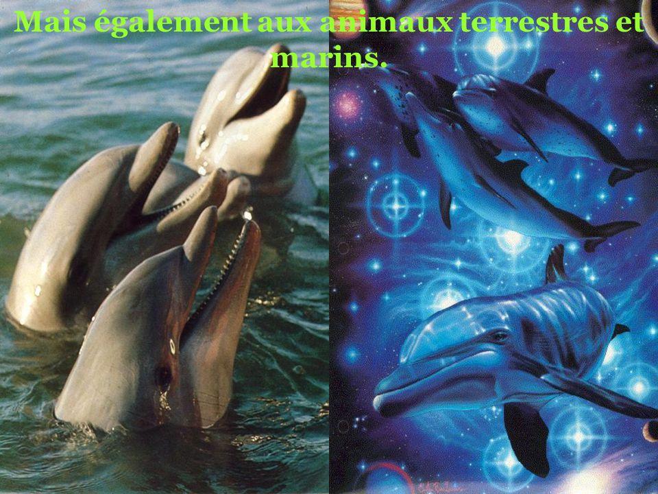 Mais également aux animaux terrestres et marins.