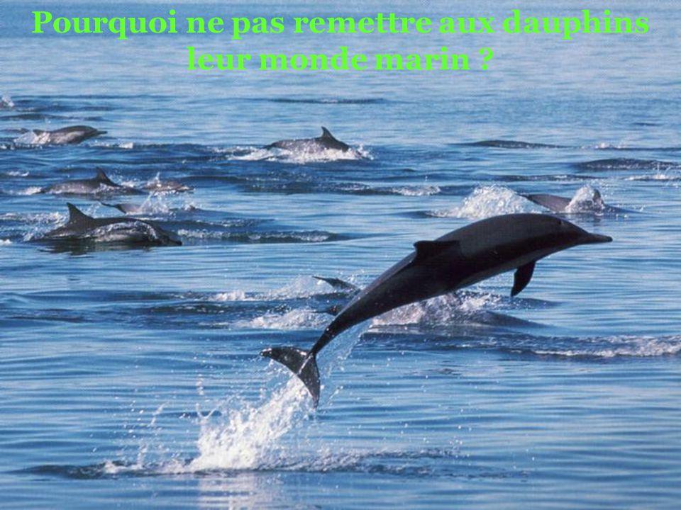 Pourquoi ne pas remettre aux dauphins leur monde marin