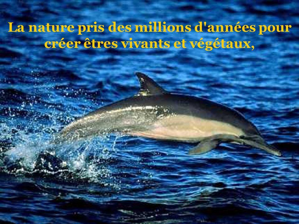 La nature pris des millions d années pour créer êtres vivants et végétaux,