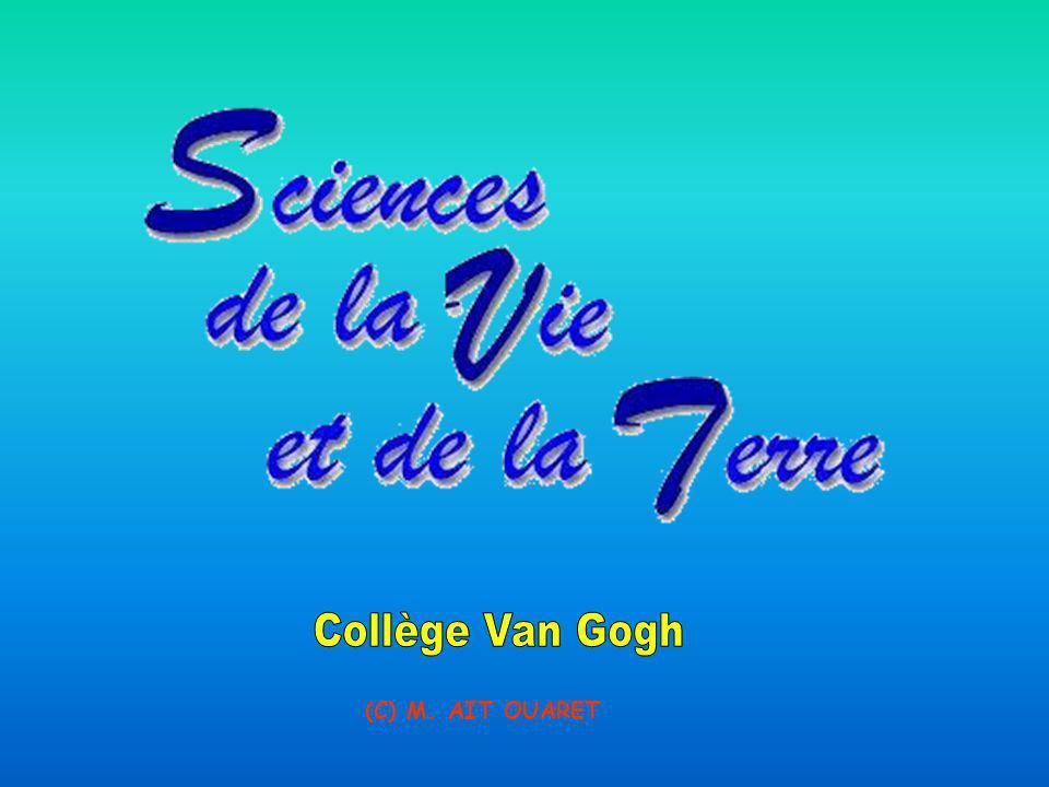 Collège Van Gogh (C) M. AIT OUARET