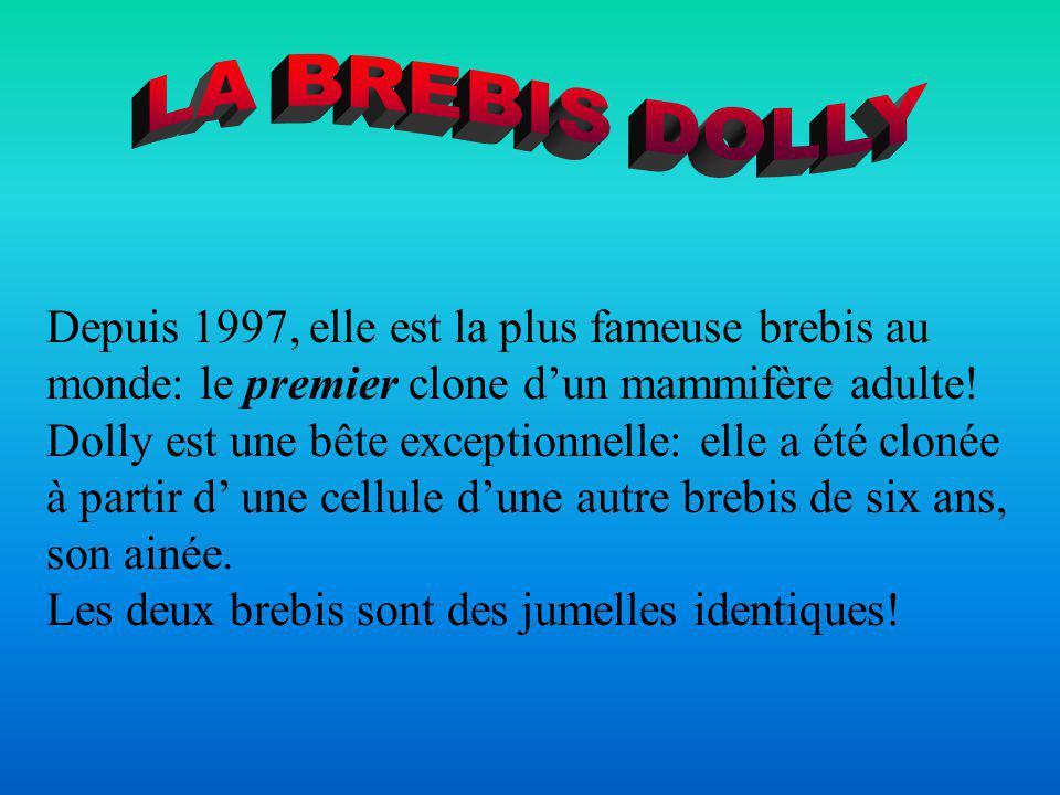 LA BREBIS DOLLY Depuis 1997, elle est la plus fameuse brebis au monde: le premier clone d'un mammifère adulte!