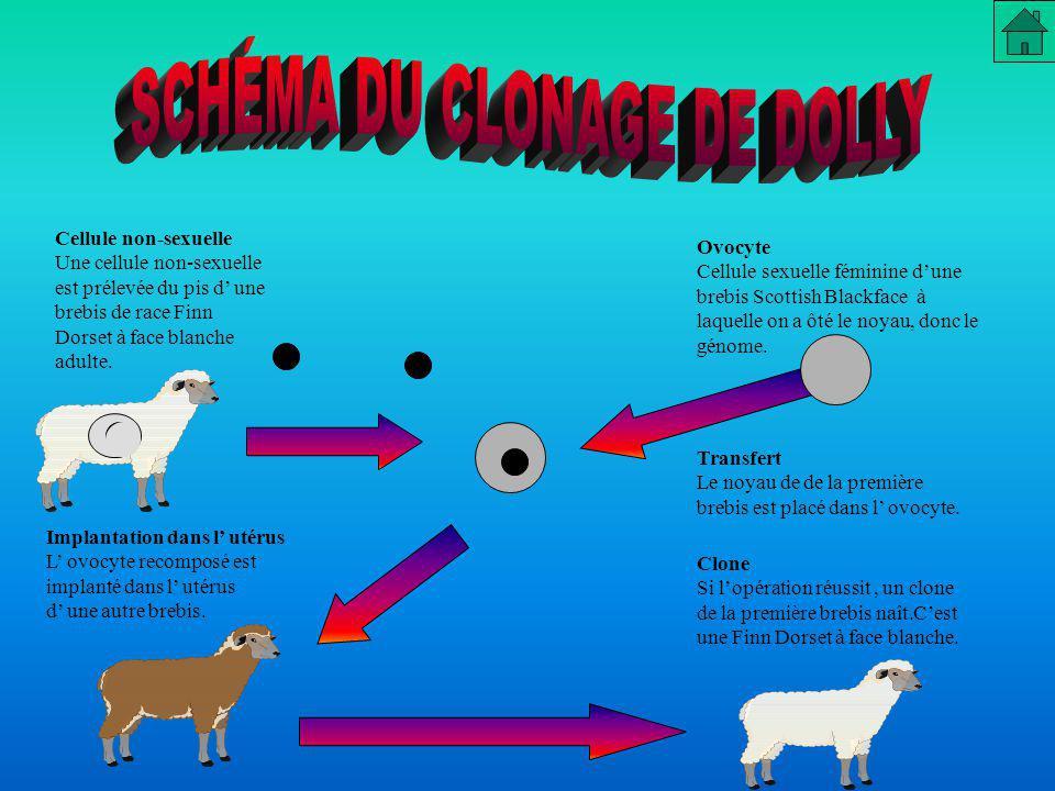 SCHÉMA DU CLONAGE DE DOLLY