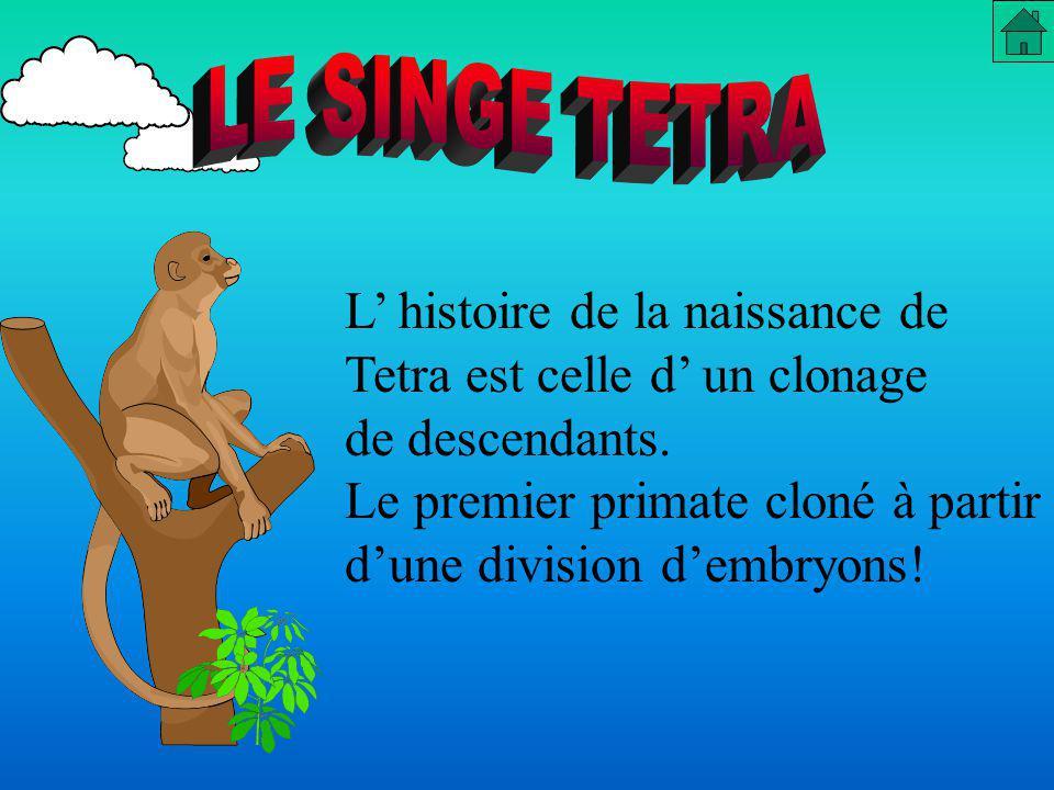LE SINGE TETRA L' histoire de la naissance de. Tetra est celle d' un clonage. de descendants.