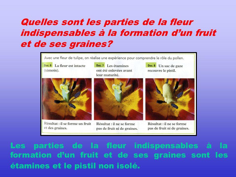 Quelles sont les parties de la fleur indispensables à la formation d'un fruit et de ses graines