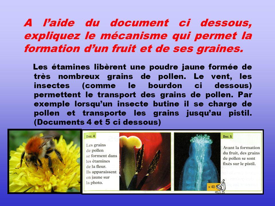 A l'aide du document ci dessous, expliquez le mécanisme qui permet la formation d'un fruit et de ses graines.