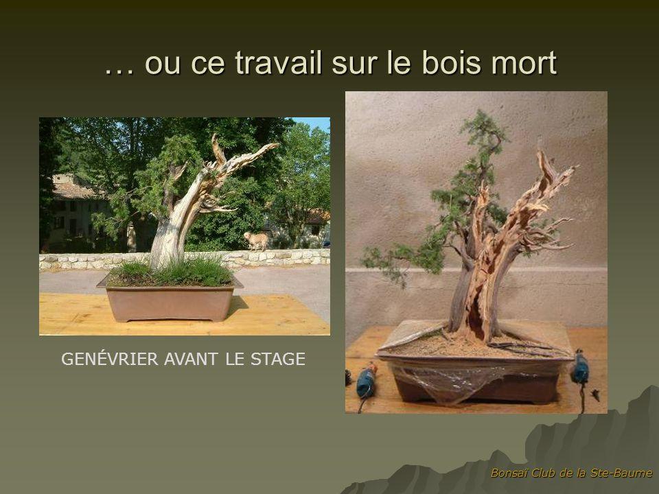 … ou ce travail sur le bois mort