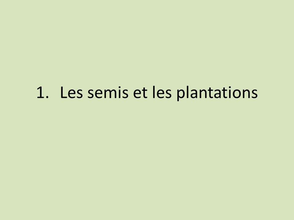 Les semis et les plantations