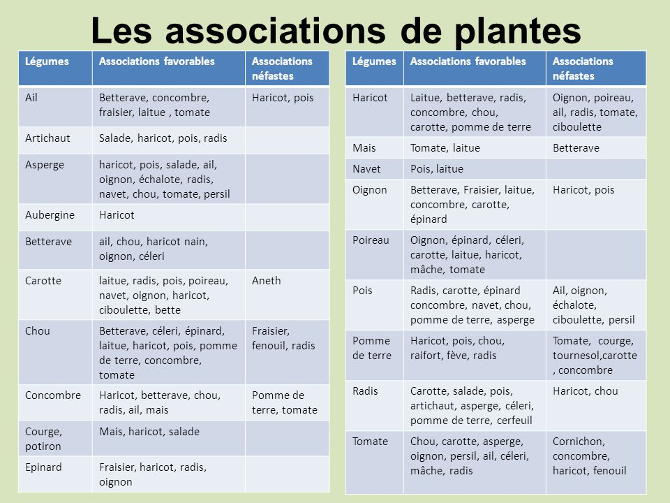 Les associations de plantes
