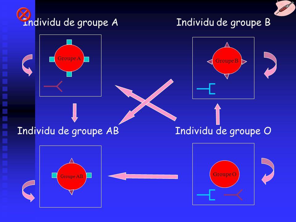 Individu de groupe A Individu de groupe B Individu de groupe AB