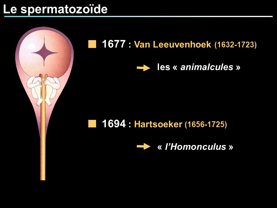Le spermatozoïde 1677 : Van Leeuvenhoek (1632-1723)