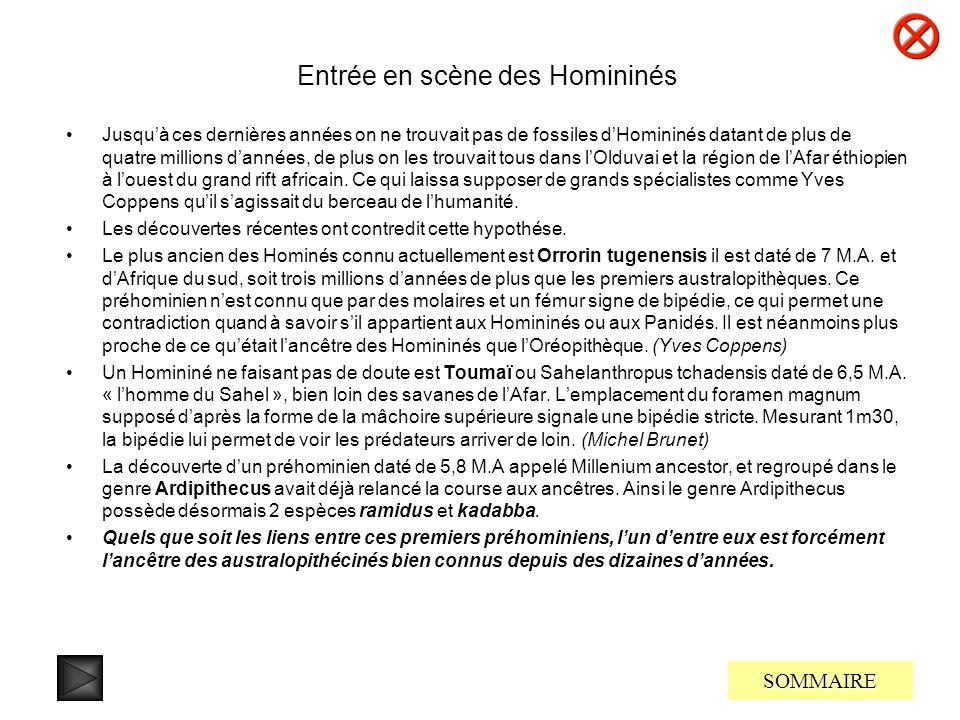 Entrée en scène des Homininés