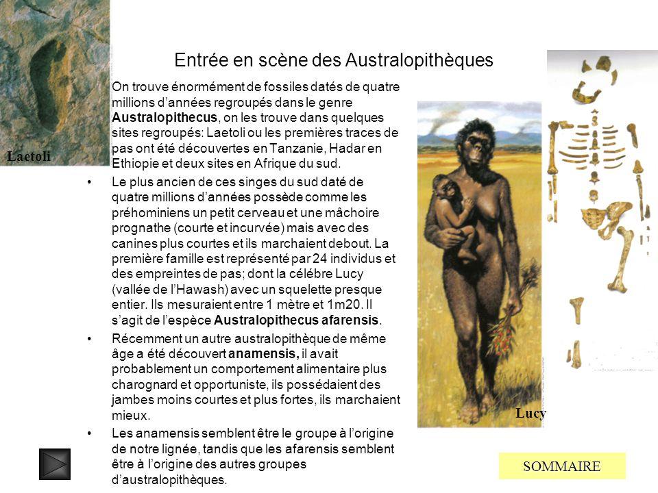 Entrée en scène des Australopithèques