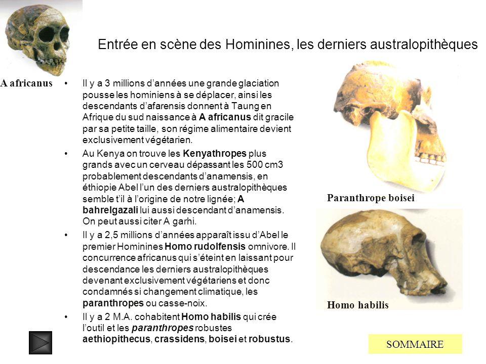 Entrée en scène des Hominines, les derniers australopithèques