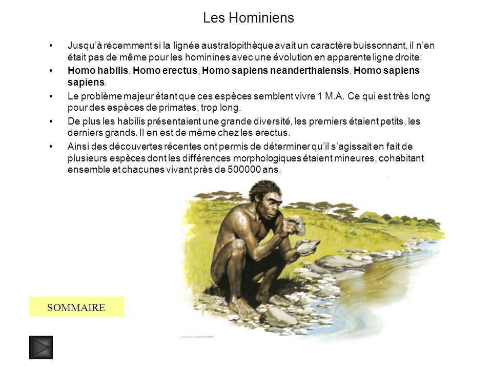 Les Hominiens SOMMAIRE