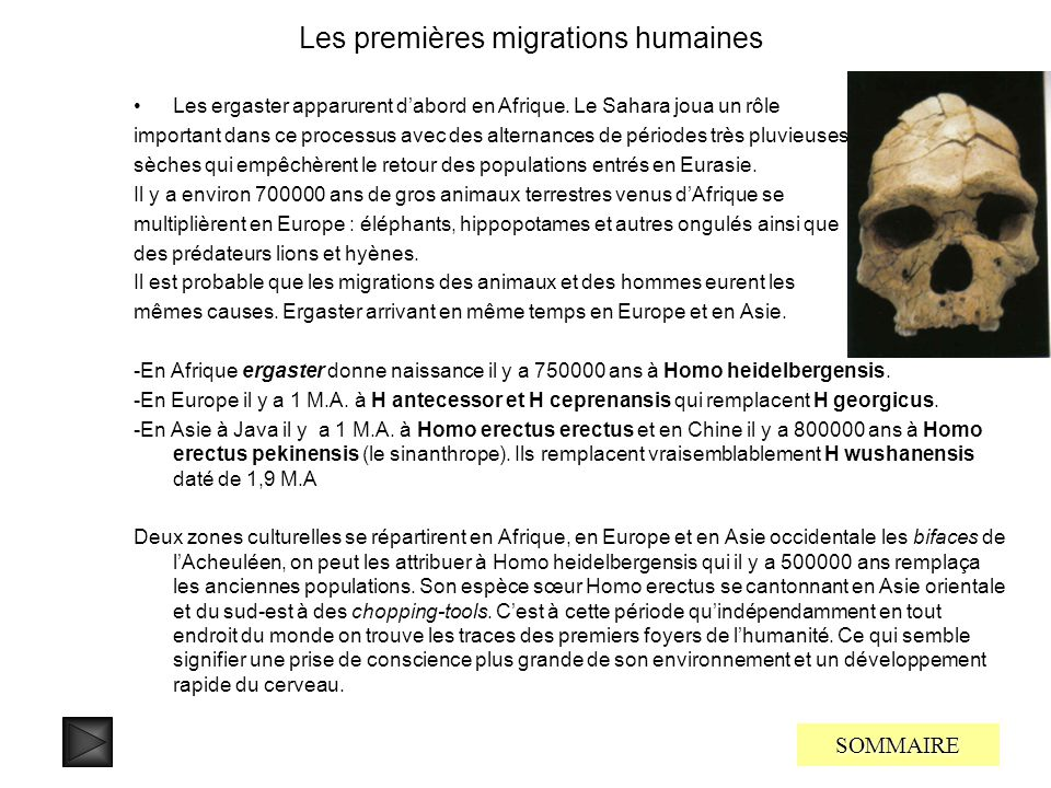 Les premières migrations humaines