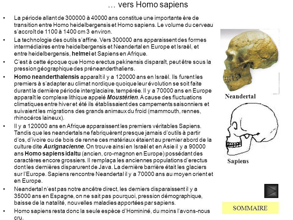 … vers Homo sapiens Neandertal Sapiens SOMMAIRE