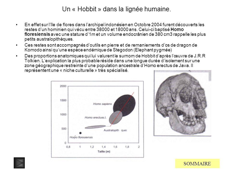 Un « Hobbit » dans la lignée humaine.