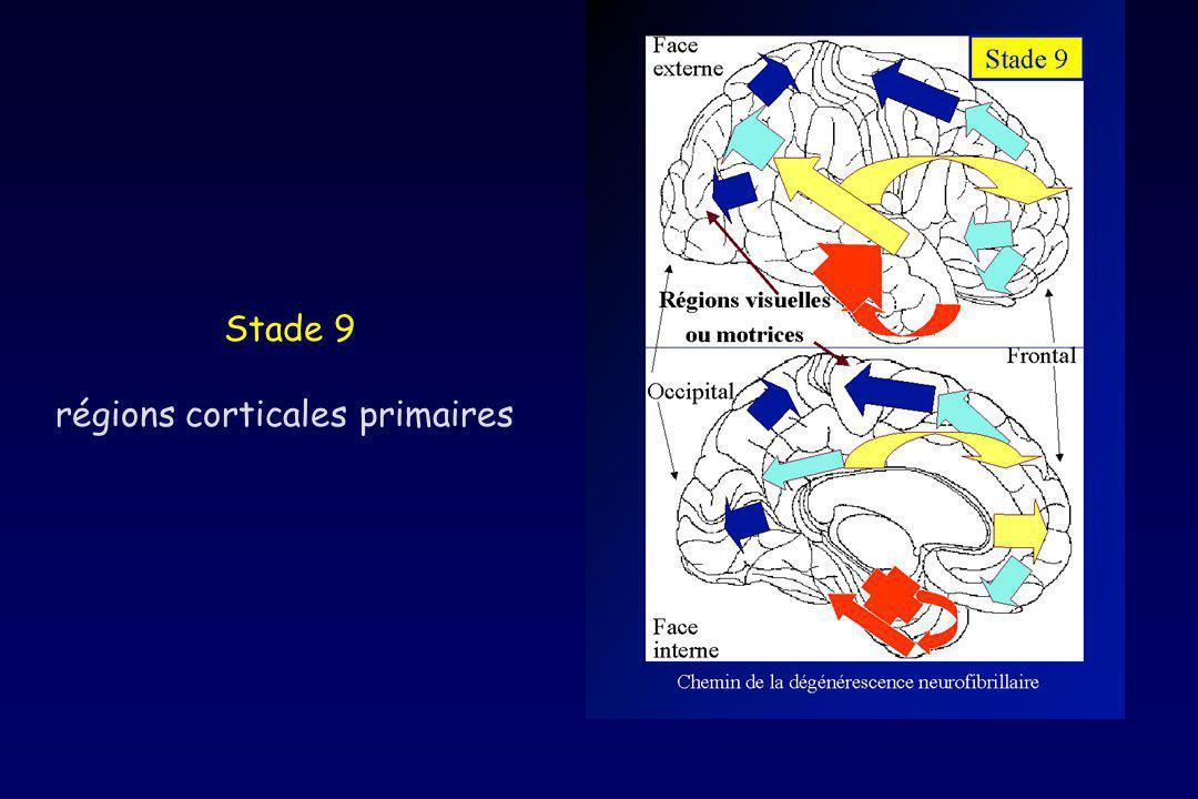 régions corticales primaires
