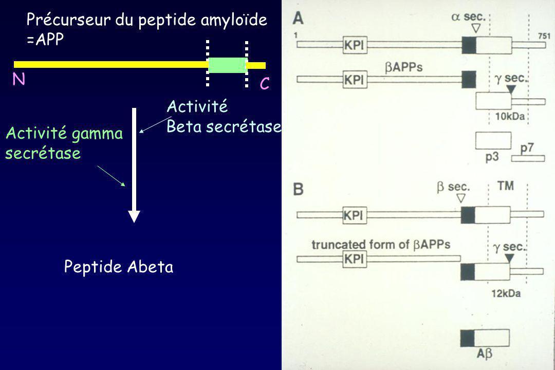 Précurseur du peptide amyloïde