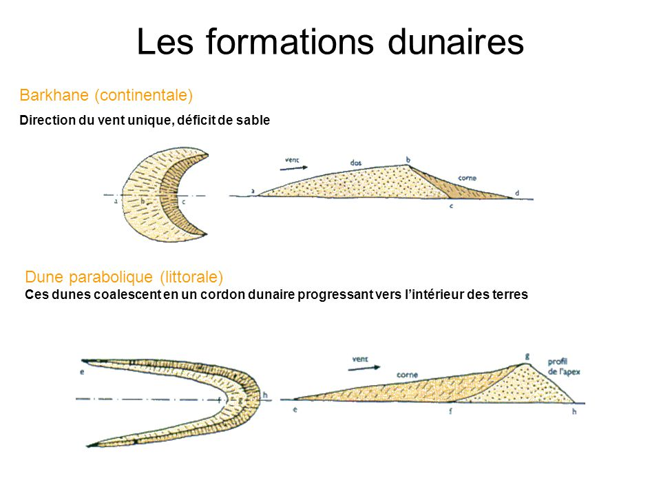 Les formations dunaires