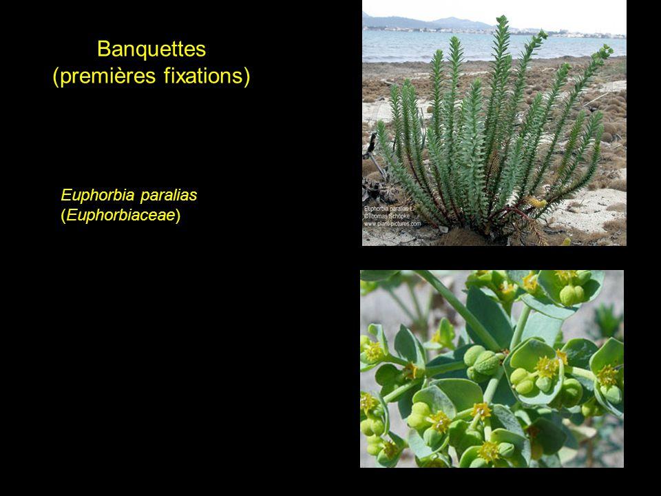 Banquettes (premières fixations)