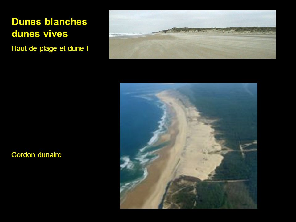 Dunes blanches dunes vives