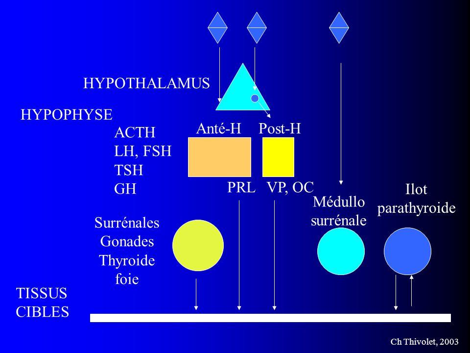 HYPOTHALAMUS HYPOPHYSE. Anté-H. Post-H. ACTH. LH, FSH. TSH. GH. PRL. VP, OC. Ilot. parathyroide.