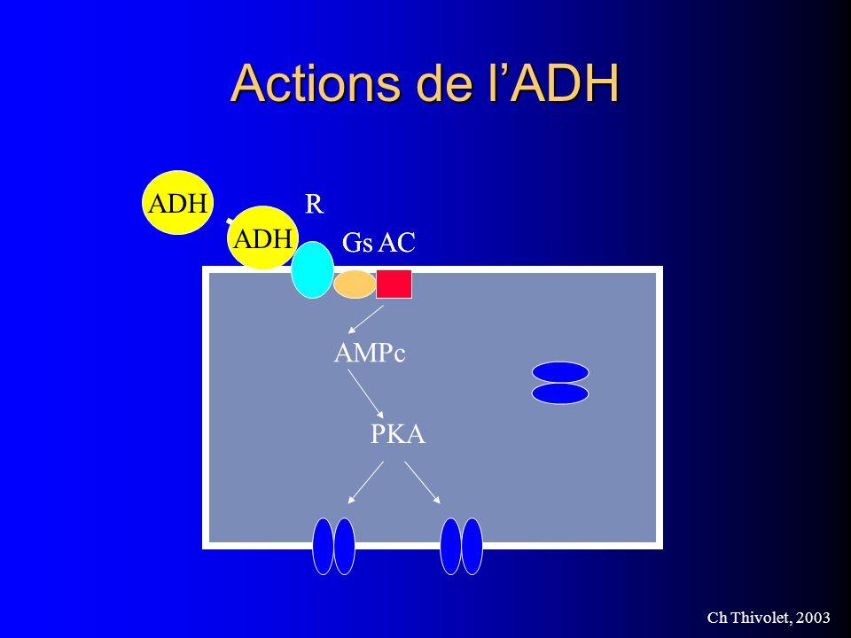 Actions de l'ADH Aquaporine ADH R Gs AC ADH R Gs AC AMPc PKA