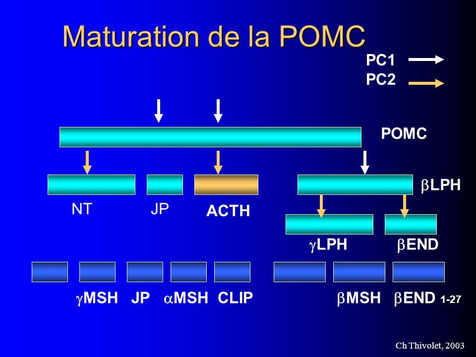 Maturation de la POMC PC1 PC2 POMC bLPH NT JP ACTH gLPH bEND
