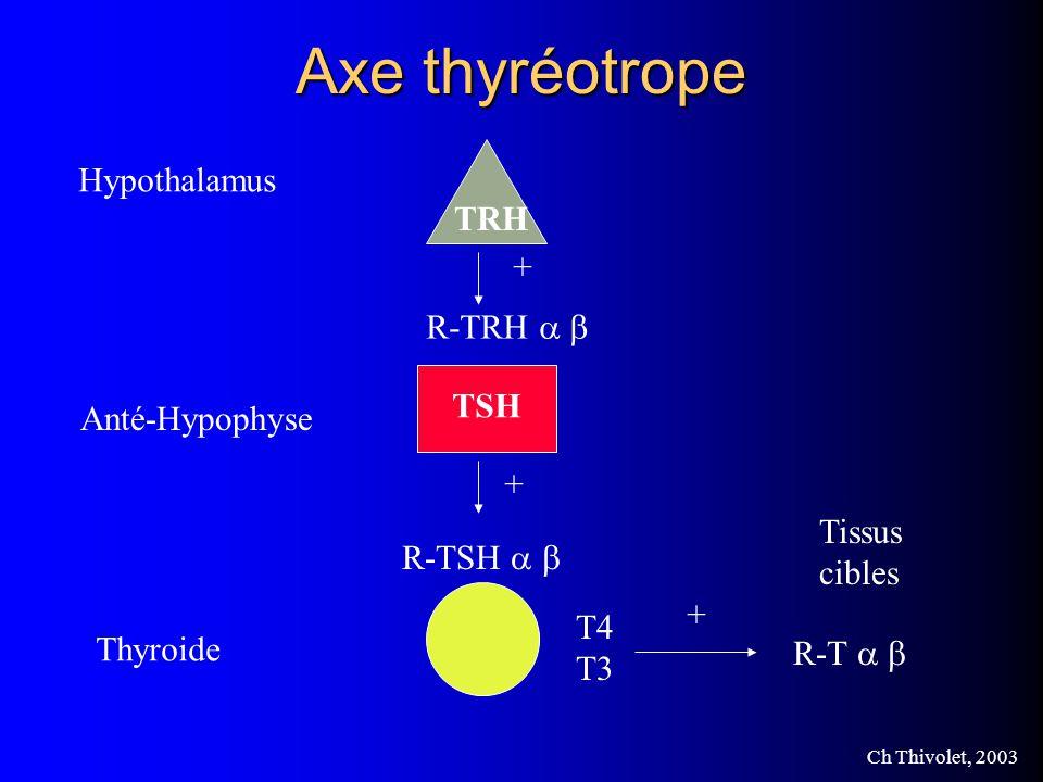 Axe thyréotrope Hypothalamus TRH + R-TRH a b TSH Anté-Hypophyse +