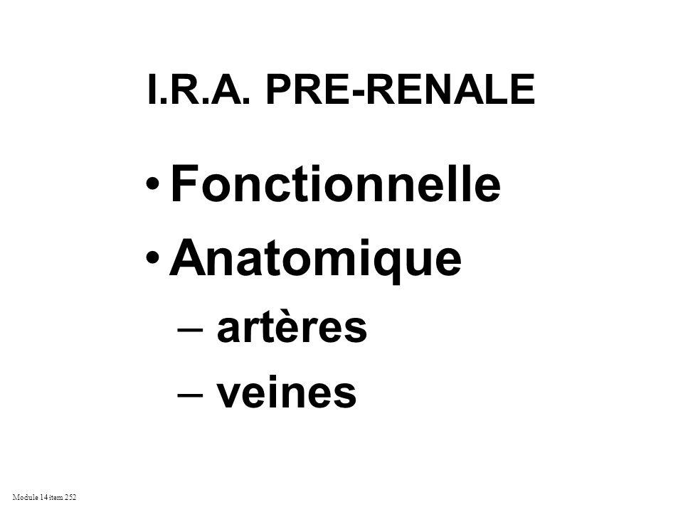 Fonctionnelle Anatomique artères veines I.R.A. PRE-RENALE