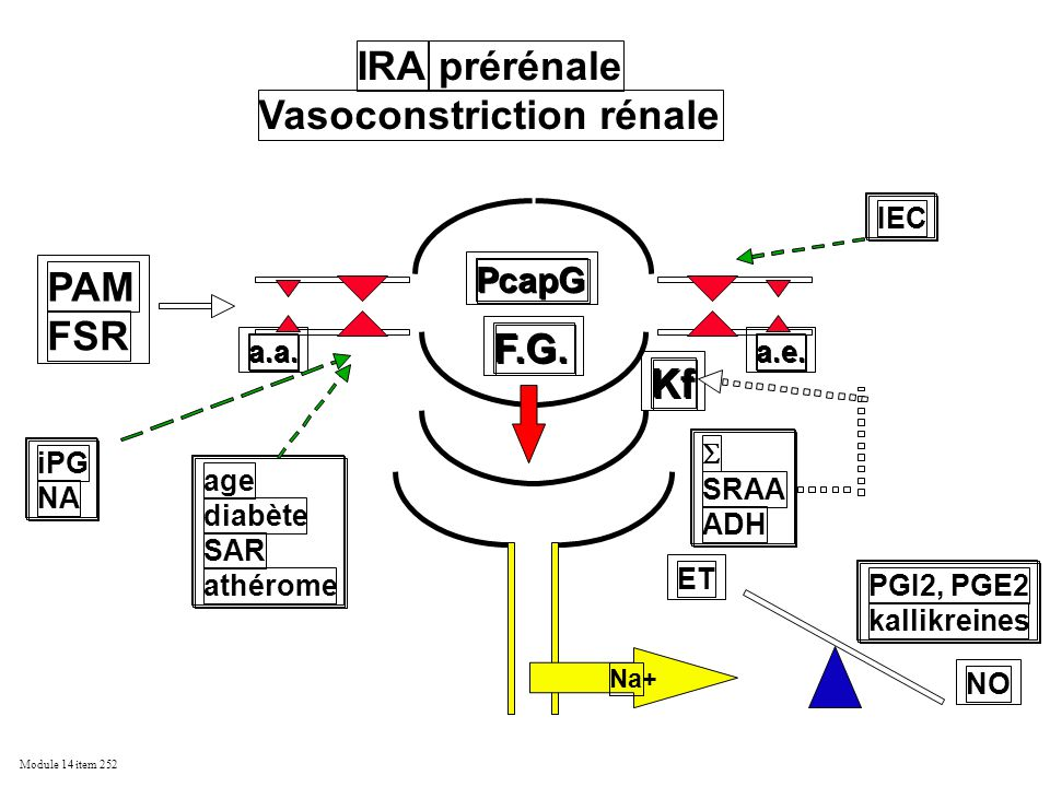 Vasoconstriction rénale