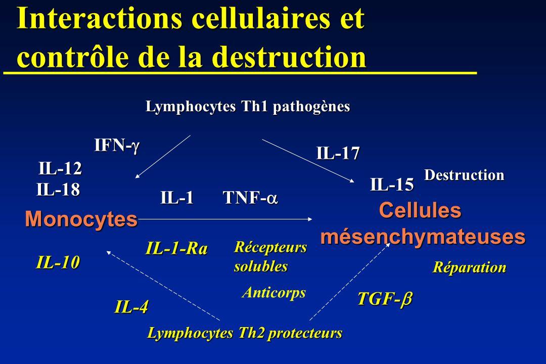 Interactions cellulaires et contrôle de la destruction